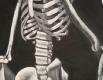 """skeleton"" white conte on black charcoal paper"
